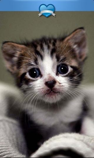 可爱萌猫高清壁纸