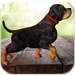 3D Dogs Puzzles - Cute Puppy Puzzle