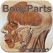 BodyParts - Human Body Part Names and Flash Cards