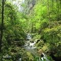 中国森林公园之美