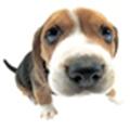 狗狗生理年龄查询