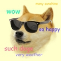 dogeweather